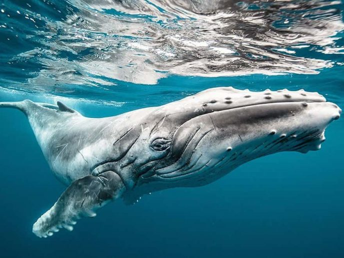Удивительное рядом: 10 невероятных снимков National Geographic