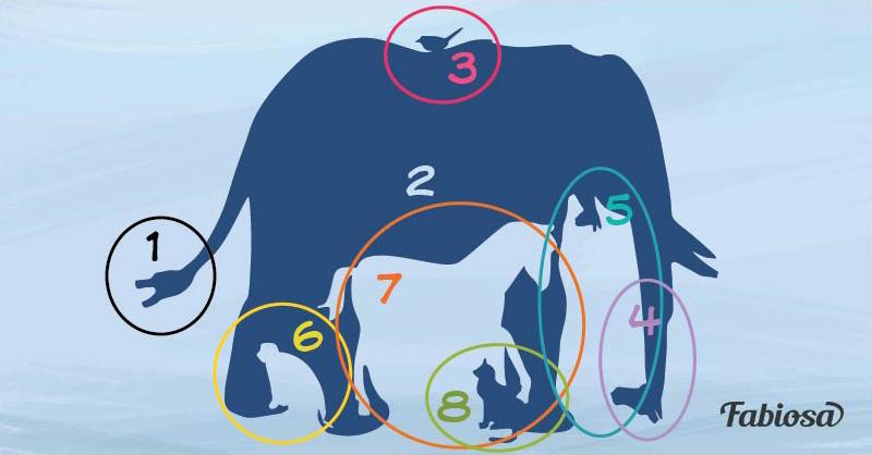сколько животных видишь на картинке ответ обрамляющие