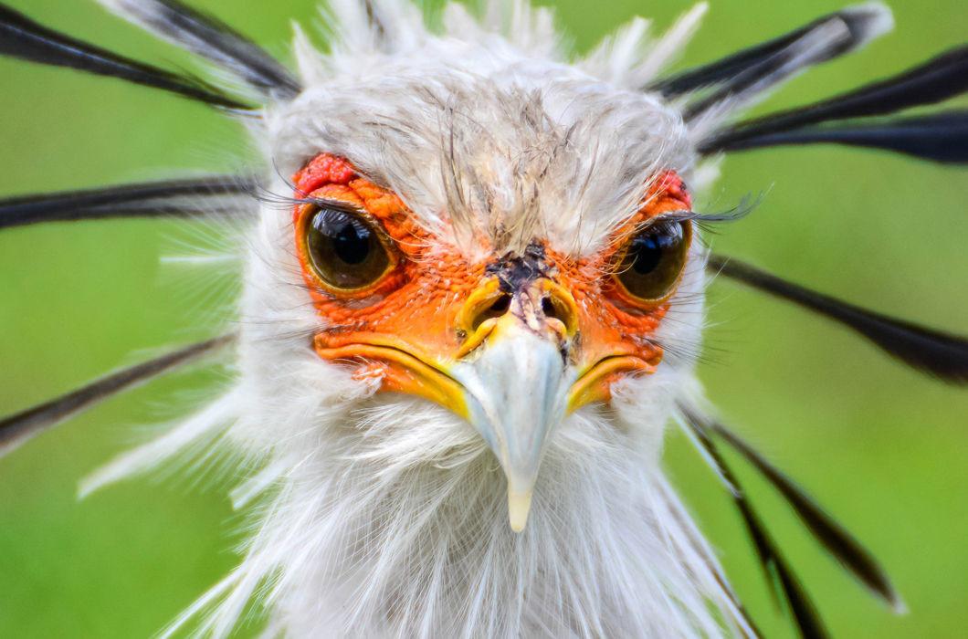 картинки животных с ресницами считаю, что идеальный