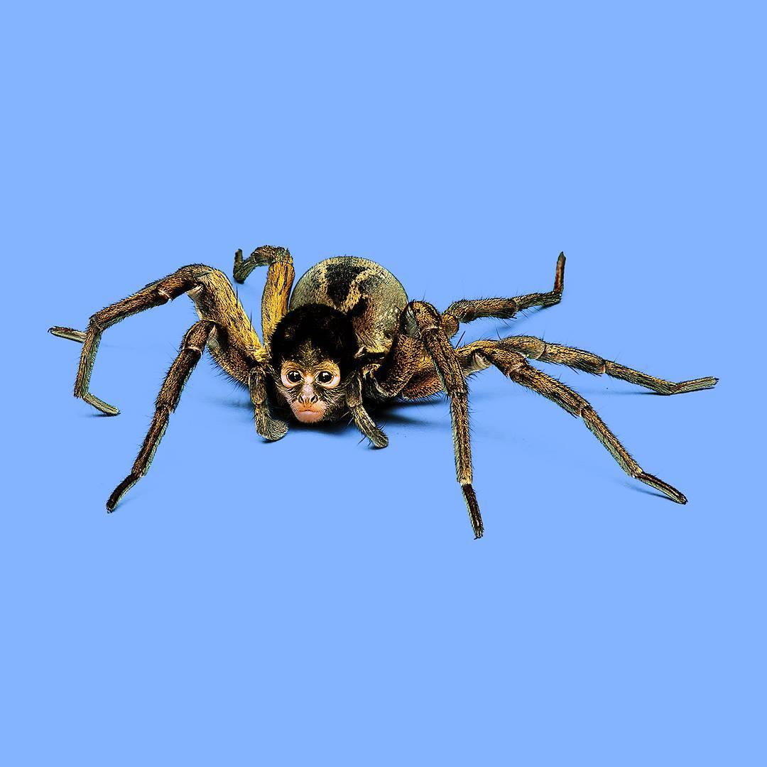 Пони пауки картинки назовём это
