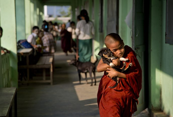 A novice Buddhist monk walks with a puppy dog at a monastic school in the suburbs of Yangon, Myanmar, Thursday, Feb. 18, 2016. Public education in Myanmar is in crisis, with crumbling schools, ill-trained teachers and many families unable to afford books, uniforms and other expenses. So schooling in a monastery is the only education that many children in Myanmar ever get, especially rural and poor children. (AP Photo/ Gemunu Amarasinghe)