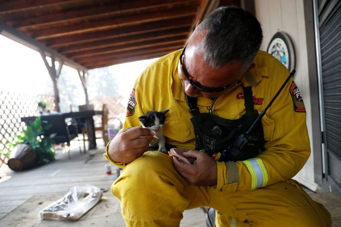 Cal Fire San Mateo-Santa Cruz Battalion Chief Aldo Gonzales feeds an injured kitten at a home while battling the Clayton Fire at Lower Lake in California