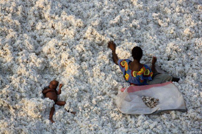 Cotton-picking near the town of Banfora, Burkina Faso (10¡36'N -   4¡47'W).