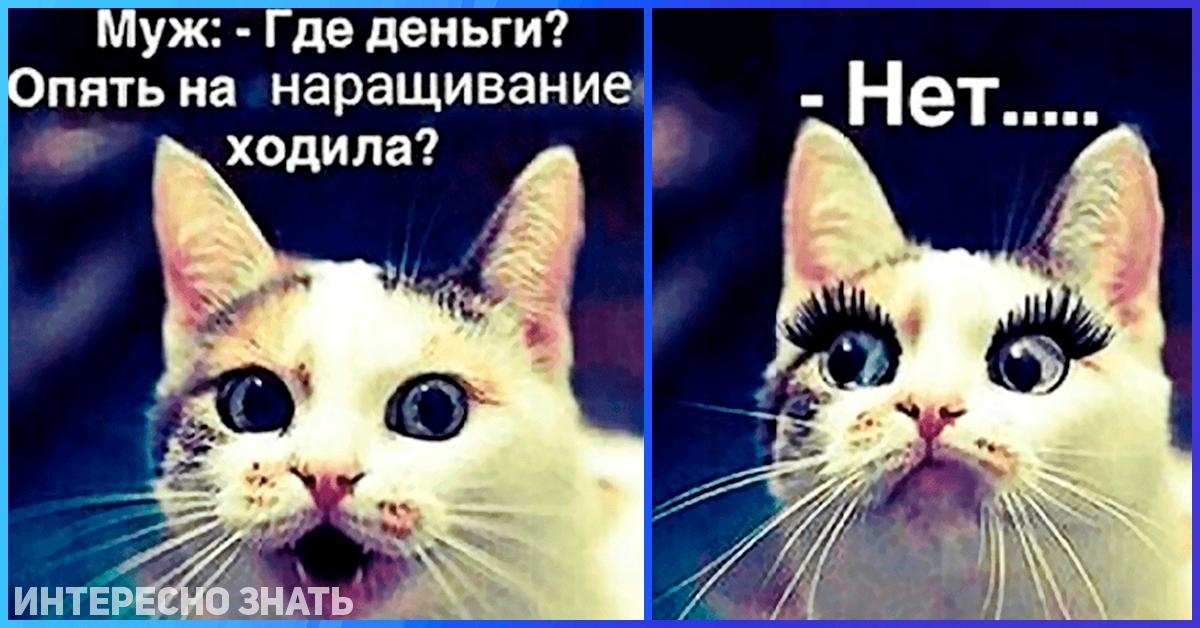 Красивые, картинка с кошкой и надписью когда муж спросит где деньги