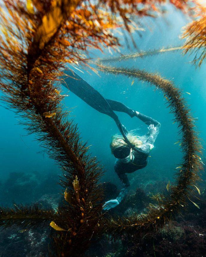 различаются необычные подводные фотографии живой природе существует