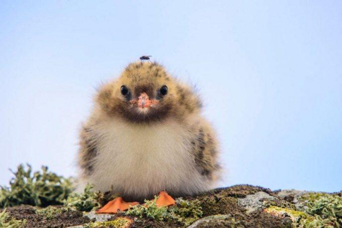 18 милейших детенышей животных, которые зарядят вас позитивом на целый день